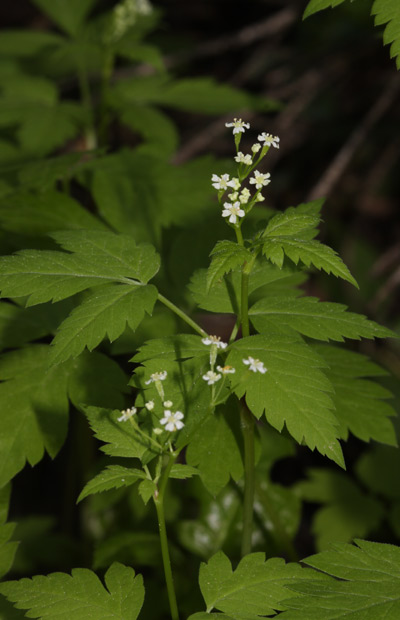 Status of Native Vascular Plants Associated with Old ...